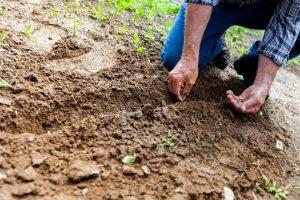 Sé la solución a la contaminación del suelo